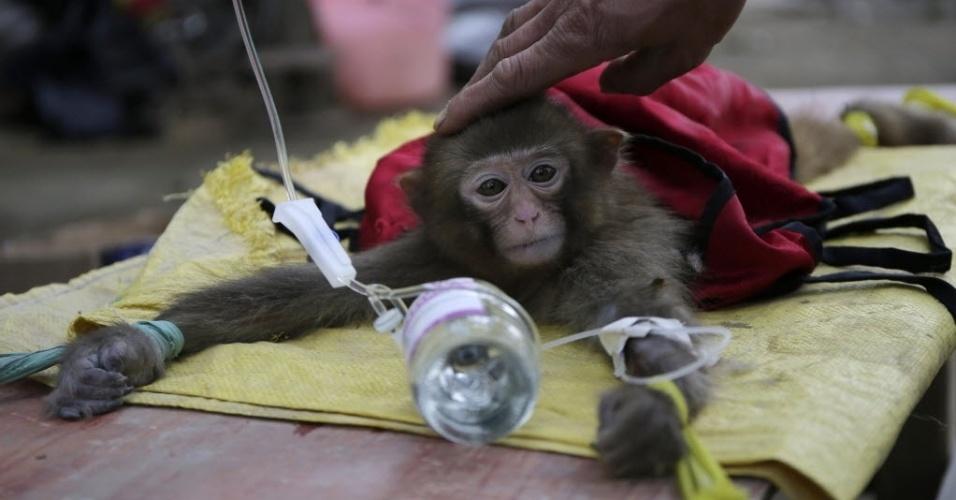 4.fev.2016 - Cuidador faz carinho na cabeça de um macaco que recebe cuidados médicos em Wuhan, na China