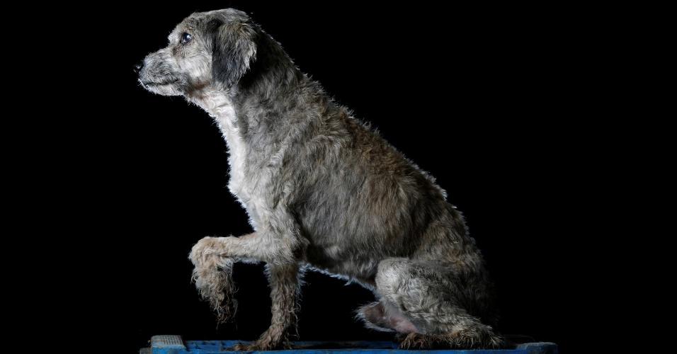 """PETETE - Petete vive no abrigo há oito anos. """"Quando ele chegou, ele tinha vermes e feridas em uma das patas. Foi difícil sarar, e mesmo quando sarou, a pata nunca funcionou normalmente de novo. Ele é amoroso, mas só até a hora da refeição, porque aí ele briga com todo mundo que chegar perto"""", conta Maria Silva, que cuida dos cachorros no abrigo Famproa, em Los Teques, Venezuela"""
