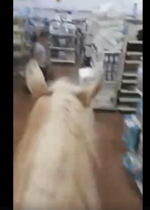 Texano e seu cavalo passeiam por supermercado