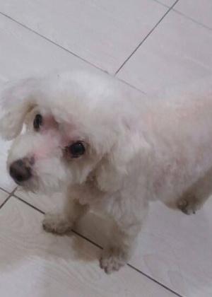 Carro usado por funcionários de pet shop foi roubado com dois poodles dentro