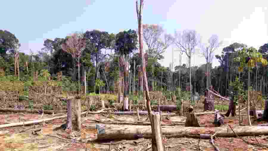 Registro da Força-Tarefa Amazônia com derrubada de árvores no dia 8 de agosto em Ajuricaba (AM) - Divulgação