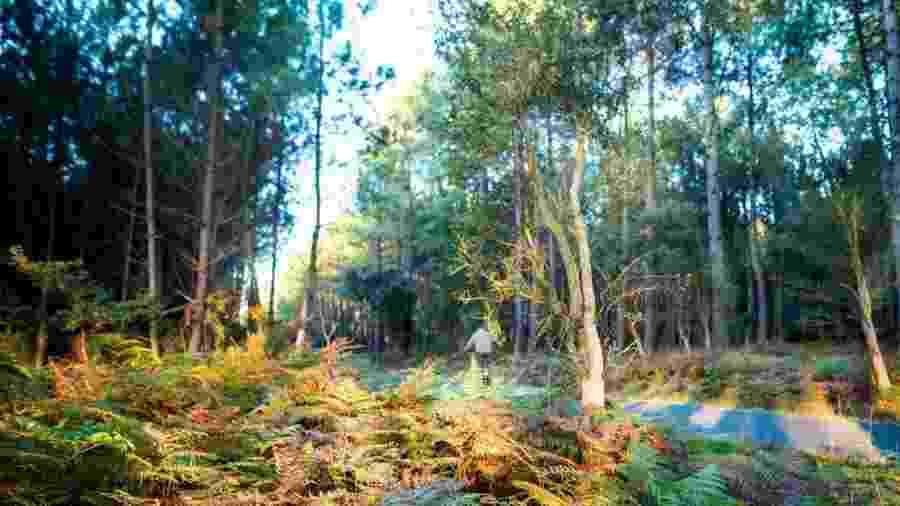 Landes é maior floresta já criada pelo homem na Europa ocidental - Getty Images/BBC