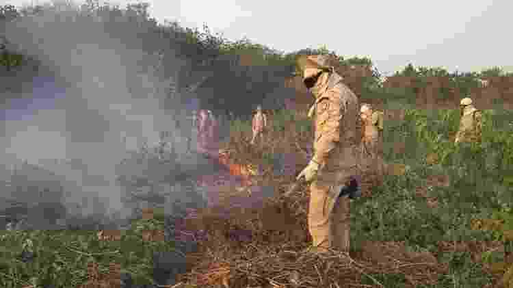 Equipes atuam intensamente no combate às chamas que tomaram conta do Pantanal nos últimos meses - Divulgação/Governo do Mato Grosso do Sul - Divulgação/Governo do Mato Grosso do Sul