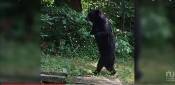 O urso Pedals foi avistado pela primeira vez em 2014