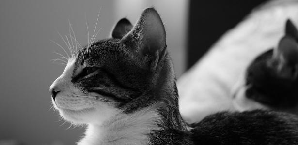 Gatos conquistaram o coração dos humanos muito antes do Egito Antigo
