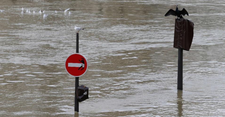 28.jan.2018 - Placas de trânsito quase desapareceram com a cheia do rio Sena. A cidade de Paris permanece em alerta para o risco de inundações