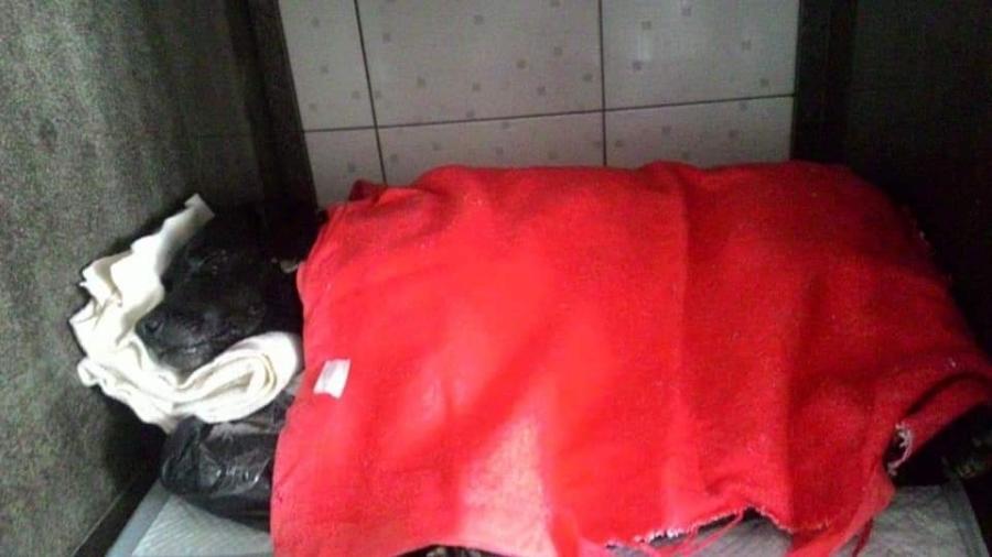 Cão é resgatado após ser enterrado vivo em Canela (RS) - Divulgação/ONG Amigo Bicho