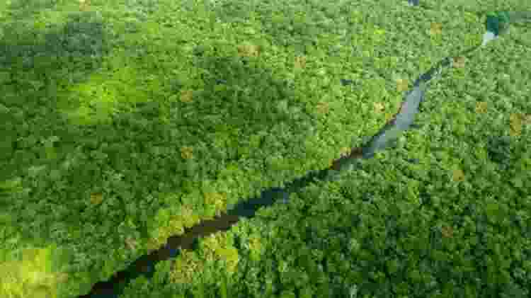 O processo de respiração e transpiração das árvores afeta diretamente o regime de chuvas - Larissa Rodrigues/BBC - Larissa Rodrigues/BBC