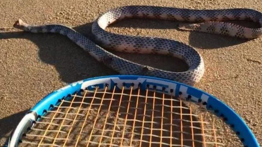 Vídeo mostra cobra sem cabeça atacando depois de ser cutucada com raquete de tênis - Reprodução/Reddit