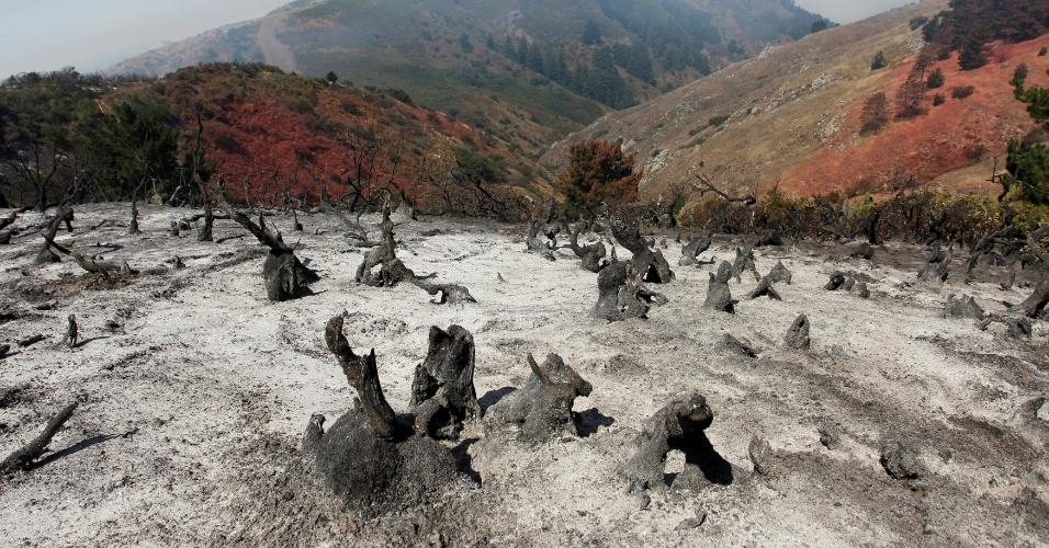28.jul.2016 - Tocos de árvores aparecem queimados em uma colina após incêndio florestal que queimou grande área nas montanhas de Carmel Highlands, na Califórnia (EUA)