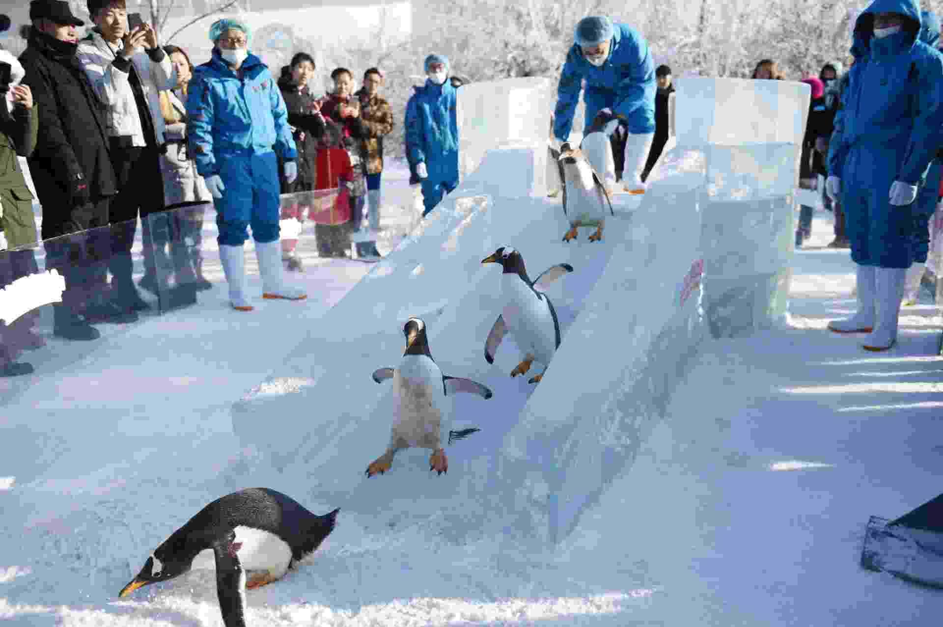 26.dez.2016 - Precisando dar uma refrescada? Pinguins do parque temático Harbin Polarland, na China, aproveitam um escorregador de gelo para se divertirem nesta segunda (26) - Xinhua/Wang Jianwei
