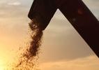 JBS começa a importar milho da Argentina
