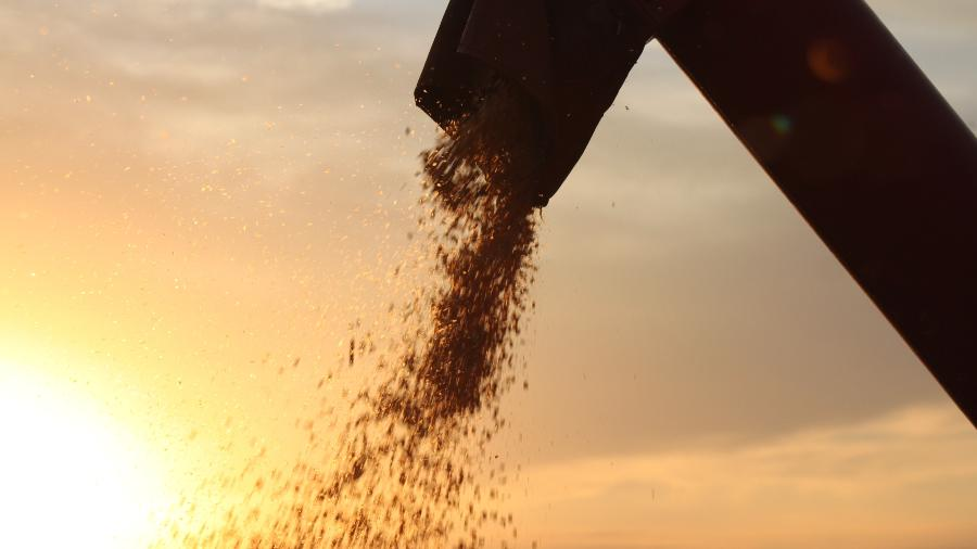 Colheita de milho no Paraná - Mauro Zafalon/Folhapress