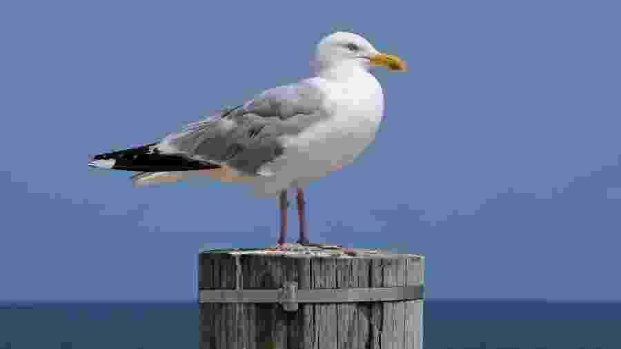 Dejetos produzidos por algumas aves marinhas podem valer milhões de dólares - Getty Images/EyeEm