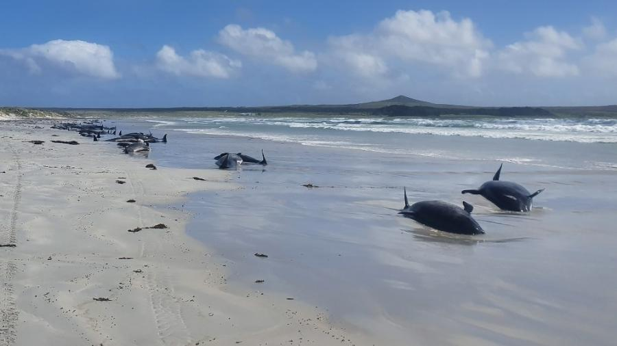 22.nov.2020 - Baleias encalhadas na Nova Zelândia - AFP PHOTO/DEPARTMENT OF CONSERVATION