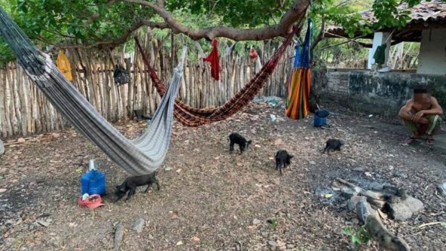 Trabalhadores conviviam com criação de porcos e não tinham energia nem água encanada - Reprodução/ MPT 7ª Região