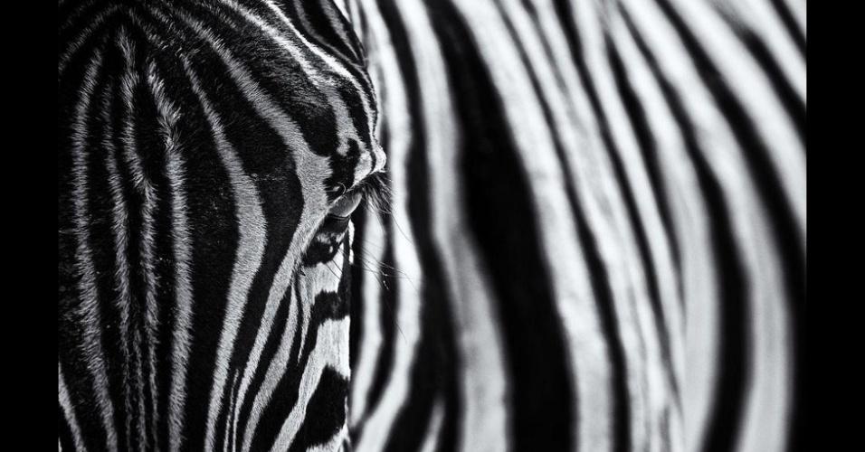 7.out.2015 - Esta foto de uma zebra foi tirada por Marco Tagliarino no Etosha National Park, Namíbia, e chamada de