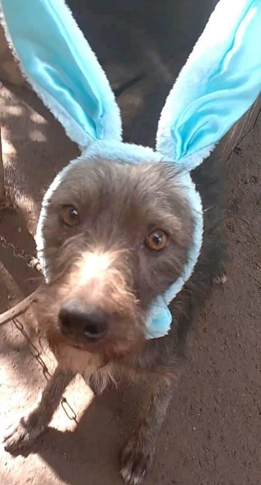 """O Cusco é definido pelo canil como """"muito alegre e brincalhão"""". Que tal presentear seu filho com um cãozinho disponível para adoção ao invés de um caro ovo de páscoa?"""