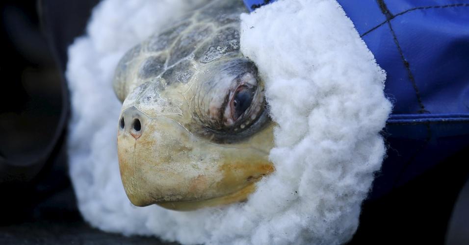 30.mar.2016 - Duas tartarugas-oliva, espécie ameaçada de extinção, foram resgatadas na costa do Estado americano de Oregon e levadas pela guarda costeira até o centro de reabilitação do parque aquático Sea World em San Diego, na Califórnia