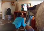 Youtube/Harmony Horsemanship