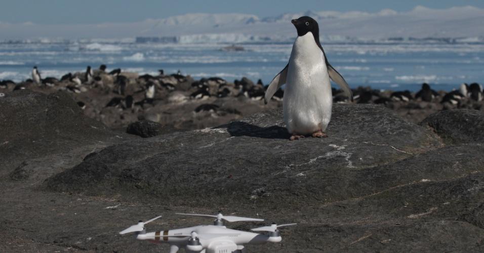 2.mar.2018 - Os cientistas pediram medidas para proteger as colônias de pinguins-de-Adélia descobertas