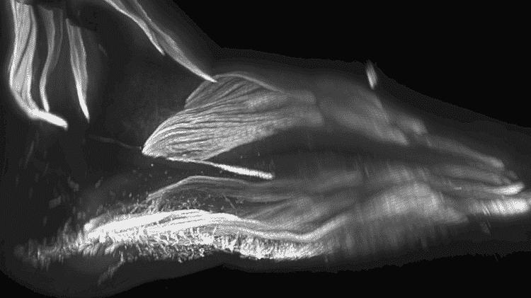 Músculos no pé de um bebê - RUI DIOGO, NATALIA SIOMAVA E YORICK GOTTON