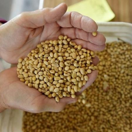 A China, maior importadora global de soja, importou 315.334 toneladas do Brasil em março - DAN KOECK/Reuters