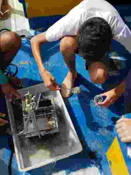 Sedimentos marinhos analisados contêm óleo - Patrícia Eichler