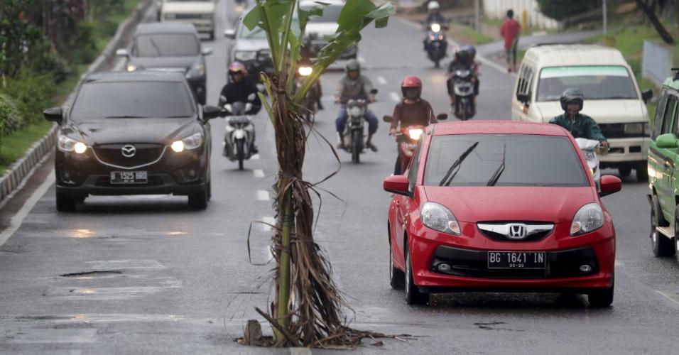 12.jan.2015 - Veículos passam por bananeira localizada no meio de uma via em Palembang, no sul da Indonésia. A árvore foi colocada no local por um morador da área para cobrir um buraco que vinha causando diversos acidentes, de acordo com a mídia local. A foto foi feita nesta segunda (11)