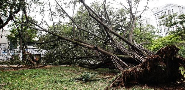 Na Praça do Pôr do Sol, em São Paulo, uma árvore caiu e as raízes ficaram expostas após forte chuva na capital paulista