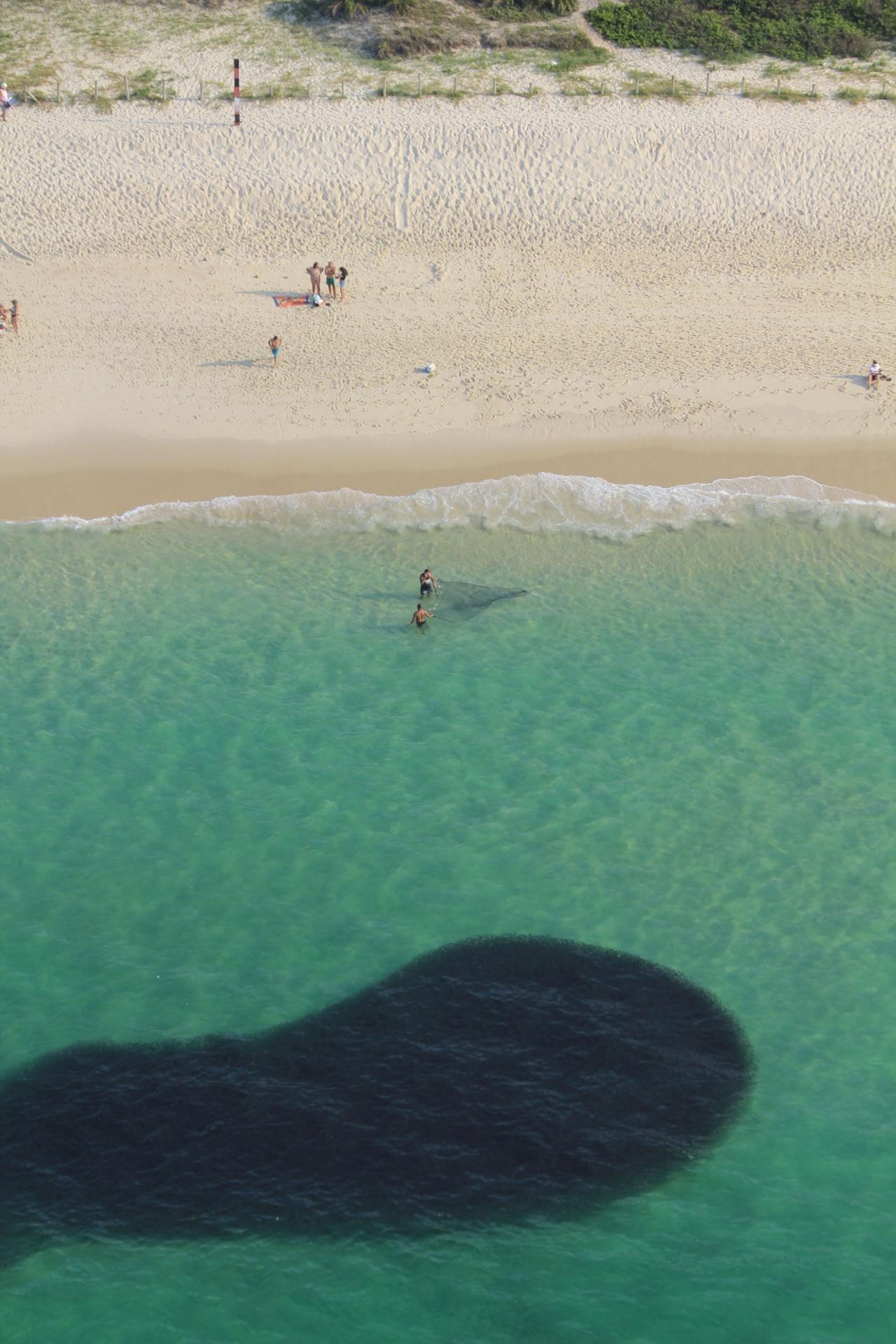 29.dez.2016 - Um cardume de sardinhas chegou bem próximo à faixa de areia da praia da Barra da Tijuca, na zona oeste do Rio
