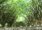 Conheça a Fazenda e Vinícola Jabuticabal, em Hidrolândia (GO) - Divulgação