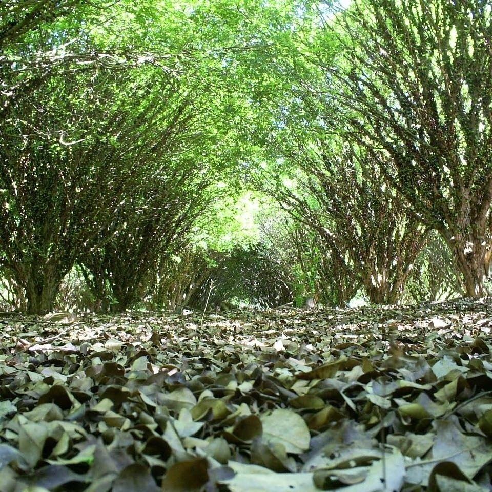 c36e88d477519 Fotos  Conheça a Fazenda e Vinícola Jabuticabal