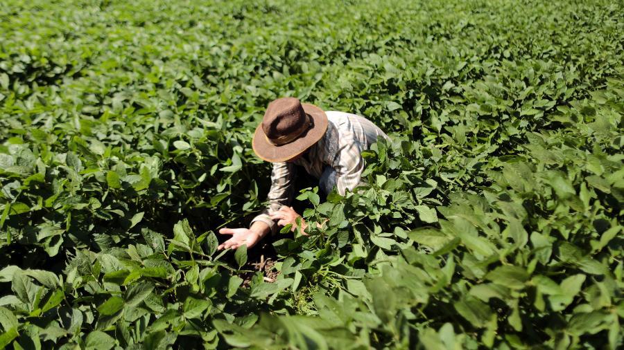 Agricultor checa plantio de soja em Barreiras (BA) - Ueslei Marcelino