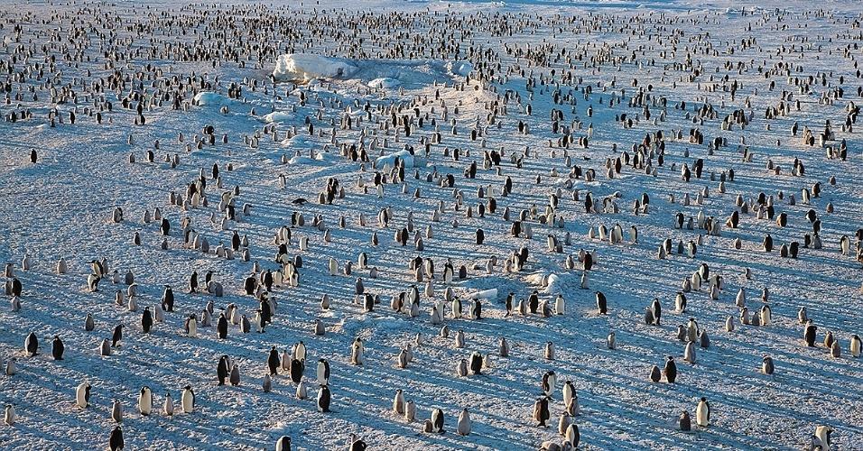 28.out.2015 - Na colônia no mar congelado, na Antártida, pinguins-imperadores, pais e filhos, relaxam sob o breve sol de verão. A distância para o mar aberto varia de acordo com a estação; no inverno, as aves precisam cruzar quilômetros para encontrar comida