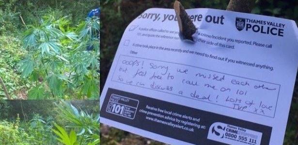 Polícia de Thames Valley deixou recado espirituoso em plantação de maconha