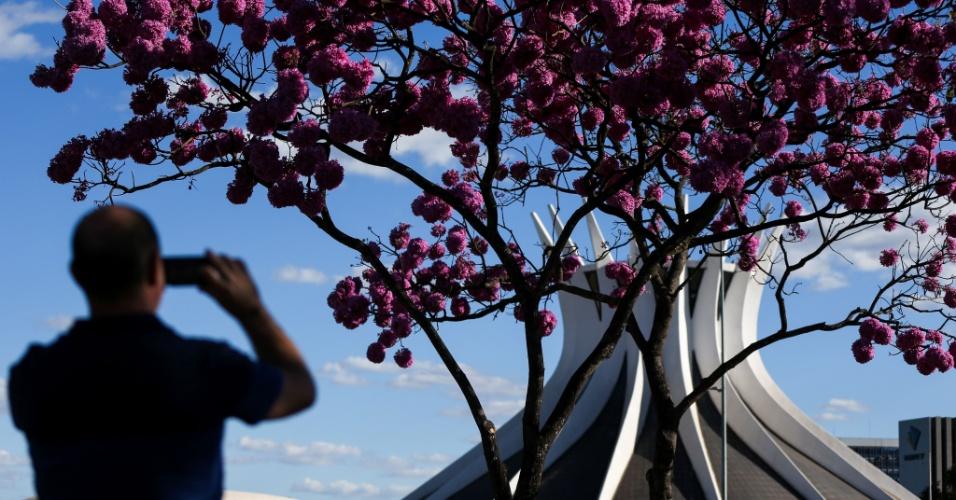 3.jul.2016 - Ipês roxos florescem em Brasília