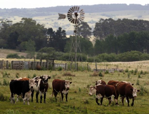 No território uruguaio, vivem 12 milhões de vacas, ou seja, há 3,5 bovinos para cada habitante
