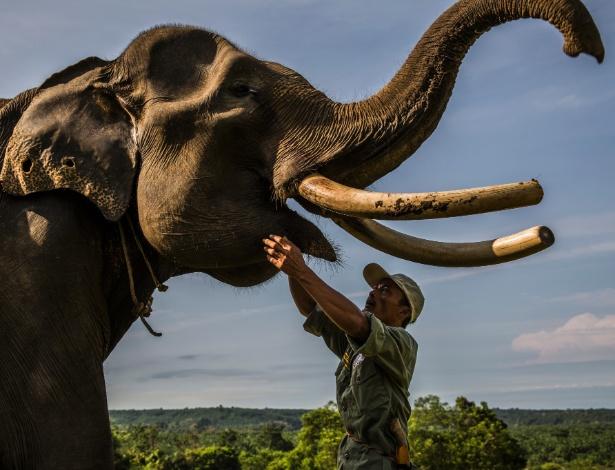 Barokah, um cuidador de elefantes, faz um exame médico em Nelson, no Centro de Conservação de Elefantes Seblat, em Bengkulu, na Indonésia