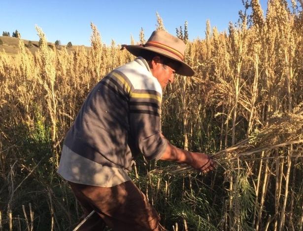 Rodrigo Cisneros cresceu comendo quinoa, mas passou a vender o grão recentemente e já viu a vida melhorar no Peru - BBC