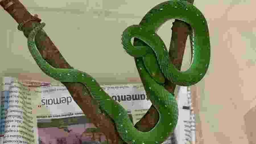 Animal está no serpentário do Zoológico de Brasília - Divulgação/Zoo de Brasília