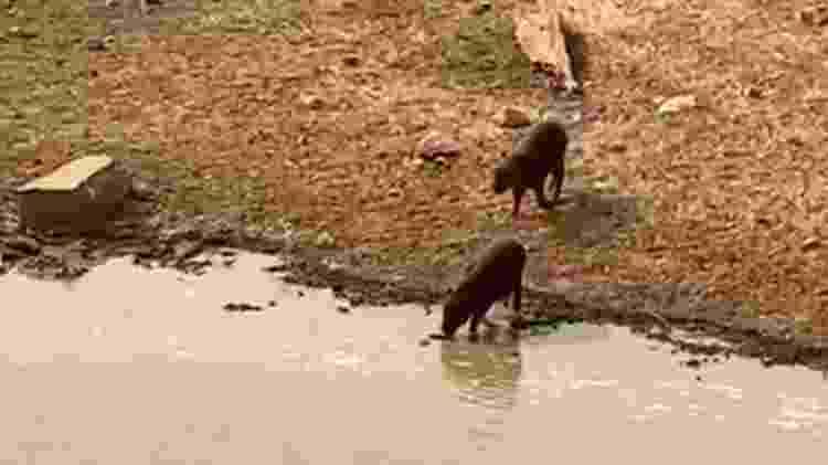 pantanal - Reprodução/Ampara Animal - Reprodução/Ampara Animal