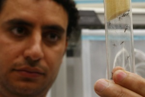 Cientista segura tubo com mosquitos 'Aedes aegypti