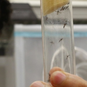 A comunidade científica está dividida. Parte acredita que os estudos são suficientes para fazer a relação causal entre zika e microcefalia, mas parte espera mais dados