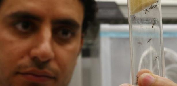 Cientista na Áustria segura um tubo com mosquitos 'Aedes aegypti' na Agência Internacional de Energia Atômica