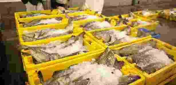 O relatório aponta para um aumento da captura em escala industrial de peixes - Getty Images - Getty Images
