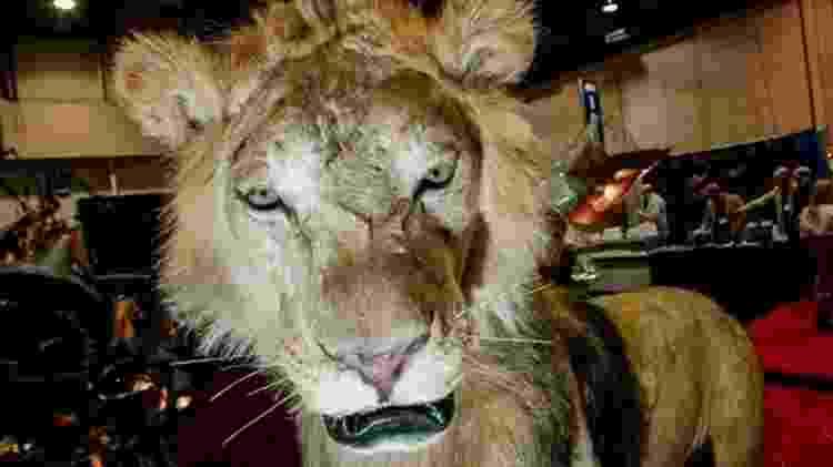 Apoiadores da liberação da caça controlada afirmam que ela gera receita para as comunidades locais - Getty Images/BBC
