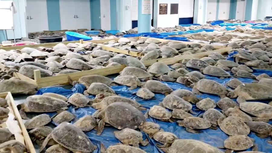 Tartarugas resgatadas no Texas após onda de frio - Reuters