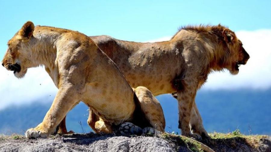 Incidente aconteceu próximo da reserva Ngorongoro  - Reprodução/Ngorongoro Conservation Area