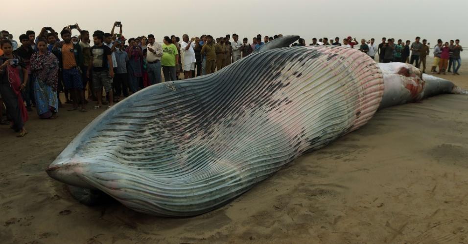 29.jan.2016 - Dezenas de curiosos se aproximam de baleia de aproximadamente sete metros de comprimento que apareceu morta em praia de Mumbai, na costa oeste da Índia